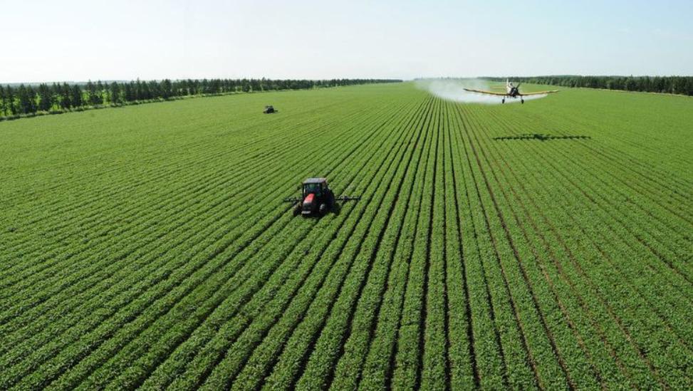 【华西农业】农发种业(600313):酒粮占比虽小,未来高成长可期插图